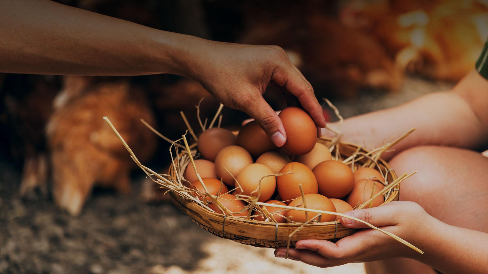 como saber si un huevo es fresco