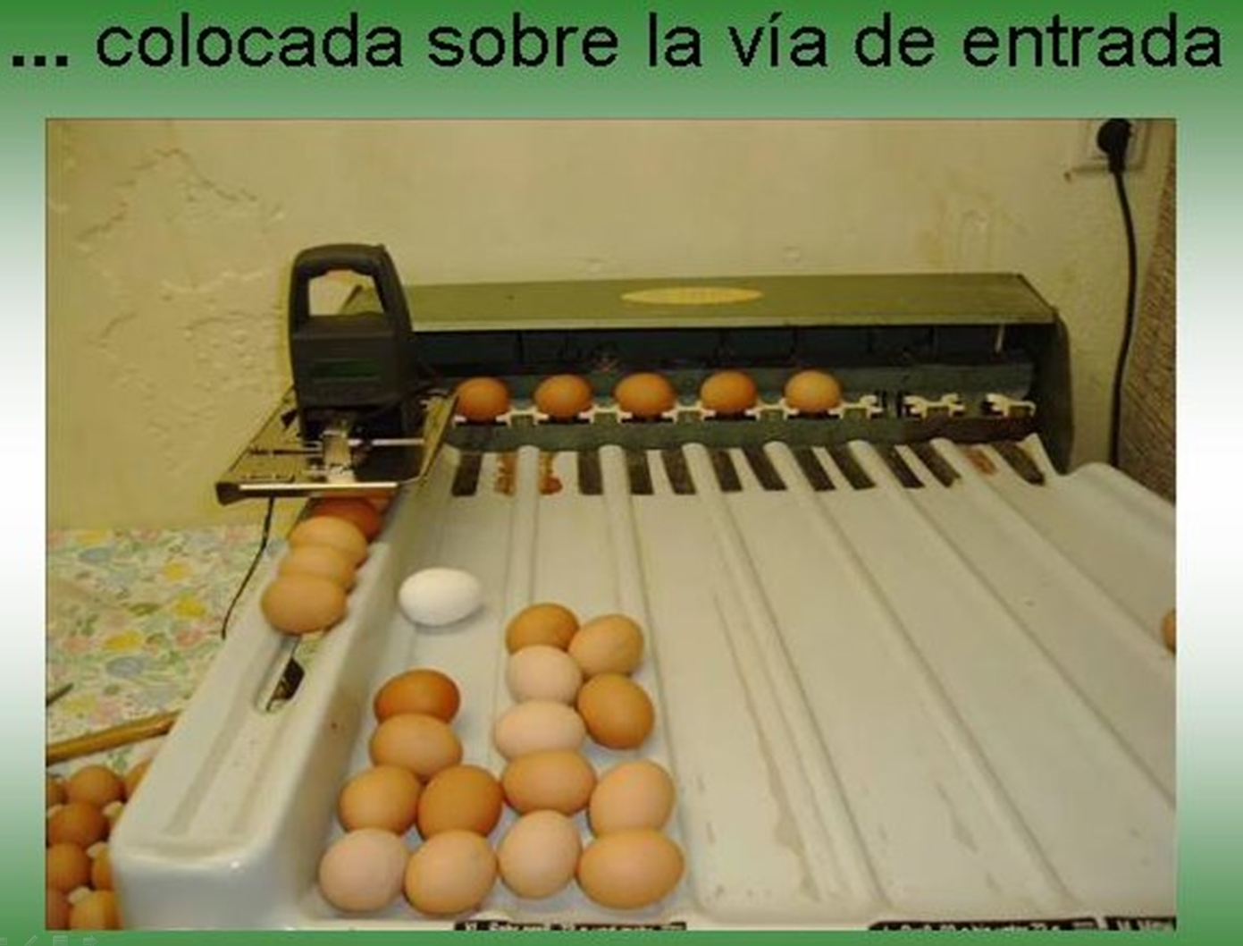 marcadora huevos automatica