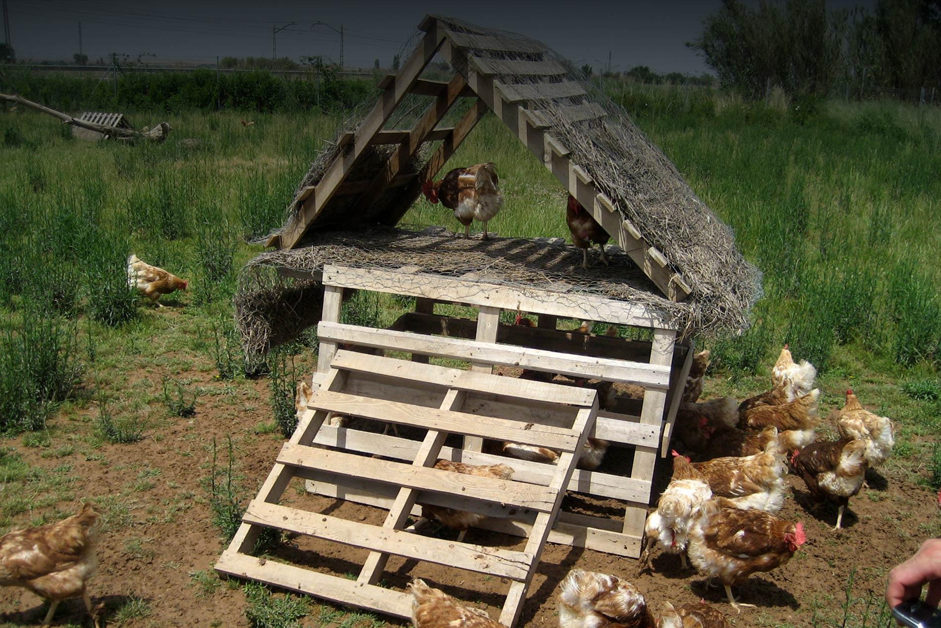 refugios gallinas