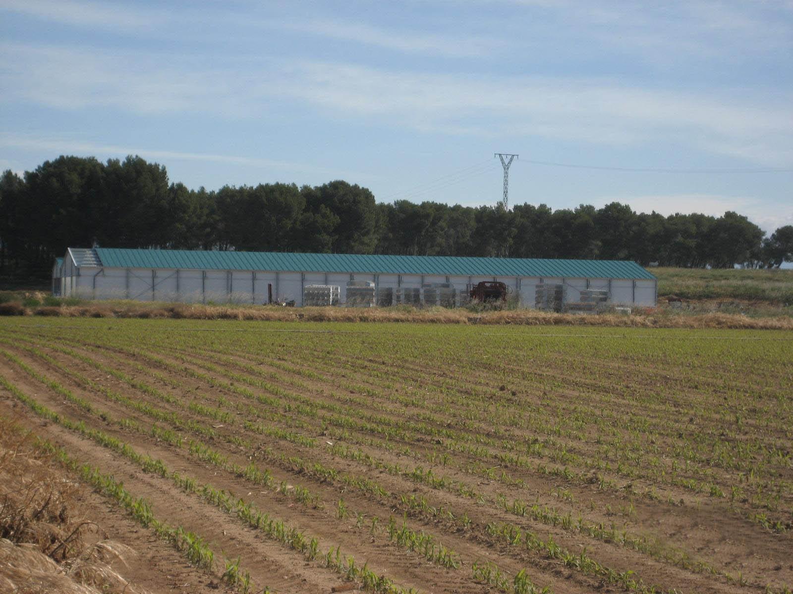 granja cunicola gurrea de gallego 11